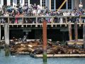 Sea Lions - die Seelöwen-Plattform am Pier 39